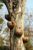 Bruket av kokosnötskalet Arkivfoto