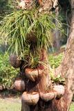 Bruket av kokosnötskalet Royaltyfri Fotografi