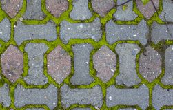 Brukowi kamienie i mech między cegłami struktura obrazy royalty free