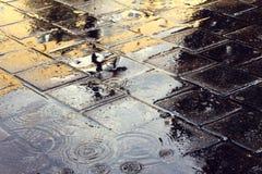 Brukowy kamień w deszczu Fotografia Royalty Free