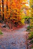 Brukujący droga przemian przez miasto parka drzew jesieni zdjęcia royalty free