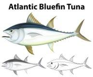 Brulionowość charakter dla atlantyckiego bluefin tuńczyka royalty ilustracja