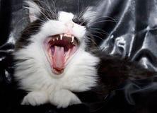 Brullende kat Stock Foto's