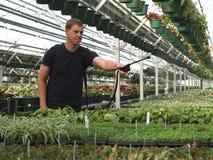 Bruma las plantas de la casa verde Fotos de archivo libres de regalías