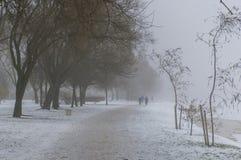 Brume d'hiver en parc Photographie stock libre de droits
