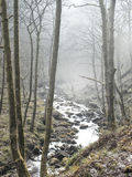 Brume d'hiver par la région boisée photos stock