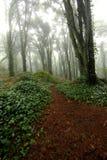 Brume dans la forêt Photos stock