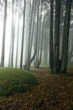 Brume dans la forêt Image stock