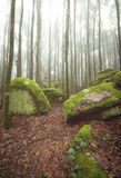 Brume dans la forêt Photo libre de droits