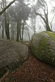 Brume dans la forêt Photographie stock