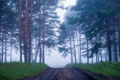 Brume dans la forêt conifére après la pluie à l'aube Photo stock