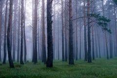 Brume dans la forêt conifére après la pluie à l'aube Photos stock