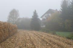 Brume de champ de maïs et jour pluvieux image libre de droits