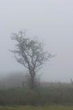 Brume de Dartmoor Photos libres de droits