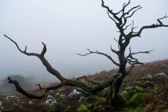 Brume de Dartmoor Photo libre de droits