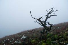 Brume de Dartmoor Images libres de droits