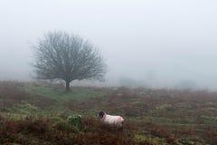 Brume de Dartmoor Photos stock
