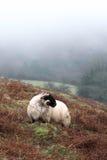 Brume de Dartmoor Photo stock