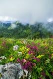 Brume de matin à la forêt tropicale tropicale Photographie stock