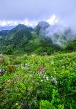 Brume de matin à la forêt tropicale tropicale Image stock