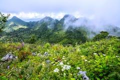 Brume de matin à la forêt tropicale tropicale Image libre de droits