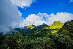 Brume de matin à la forêt tropicale tropicale Photos libres de droits
