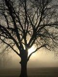 Brume de matin Image stock