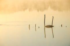 Brume de matin au-dessus du lac Photos stock