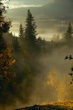 Brume de matin dans la région boisée de montagne Photos libres de droits