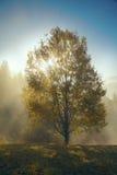 Brume de matin dans la région boisée de montagne Photo libre de droits