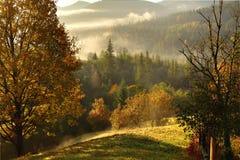 Brume de matin dans la région boisée de montagne Photos stock