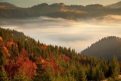 Brume de matin dans la région boisée de montagne Image stock