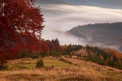 Brume de matin dans la région boisée de montagne Images libres de droits