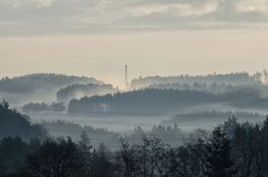 Brume de matin dans les bois image libre de droits