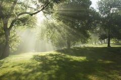 Brume de matin de bord de rivières Images libres de droits