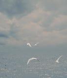 Brume de mer Images libres de droits