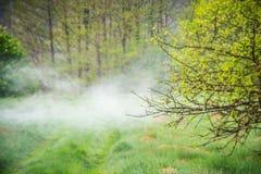 Brume de ressort et feuilles vertes fraîches images libres de droits