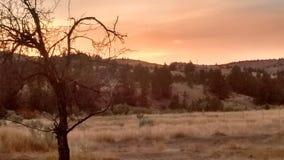Brume du feu de forêt de Smokey photos stock