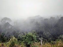 Brume foncée dans le brouillard de forêt dans les montagnes et une silhouette solitaire loin photo libre de droits
