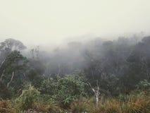 Brume foncée dans le brouillard de forêt dans les montagnes et une silhouette solitaire loin photo stock