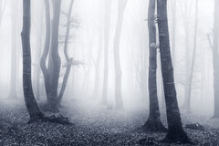 Brume légère et bleue dans la forêt Images stock