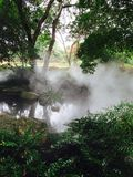 Brume sur les arbustes et les arbres verts dans le jardin Photos stock