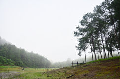 Brumeux et pleuvant dans le matin chez Pang Ung en Mae Hong Son Photos stock