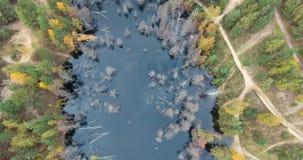 Brummen, das über die Sümpfe und die Flüsse fliegt stock video footage