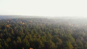 Brummen, das nach rechts über unglaublichem sonnigem Herbstwald, epischem hellem Sonnenaufgangnebelhimmel und Blendenfleckpanoram stock video footage