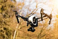 Brummen, das nahe Wald fliegt Stockfotografie