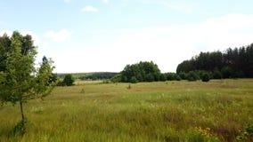 Brummen, das niedrig über Sommergraswiese fliegt Luftschuß des idyllischen sonnigen Feldes mit dem üppigen Grün, den Bäumen und d stock footage