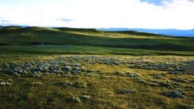 Brummen, das vorwärts über majestätische ruhige Frühlingsgrasland-Landschaftsfelder mit zwei Rotwild frei gehen am sonnigen Tag f stock video