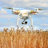 Brummen in der Landwirtschaft Lizenzfreie Stockfotos