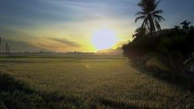 Brummen fliegt über Reis-Felder nahe Palmen gegen einzigartige Dämmerung stock footage